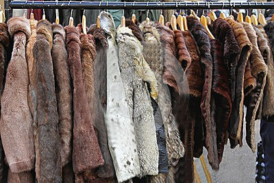 fur-coats-various-animal-hangers-42171314