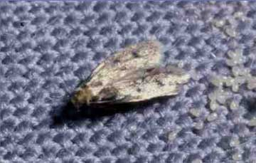 Moth Removal Fur Coats Marc Kaufman Furs