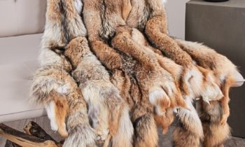 Coyote fur skin Marc Kaufman Furs